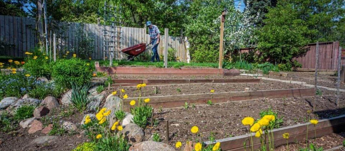 Charles Schroder of St. Albert utilizes many raised garden beds for various vegetables.